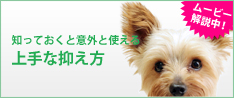 犬の上手な抑え方ムービー公開中!